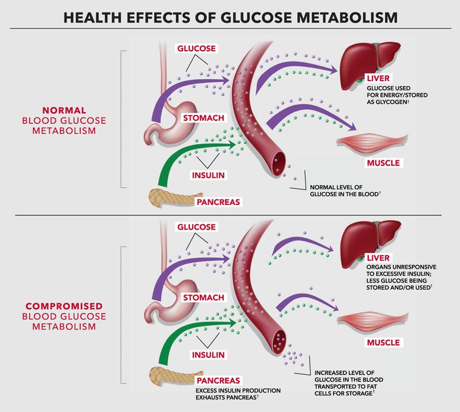 Blood sugar and metabolism